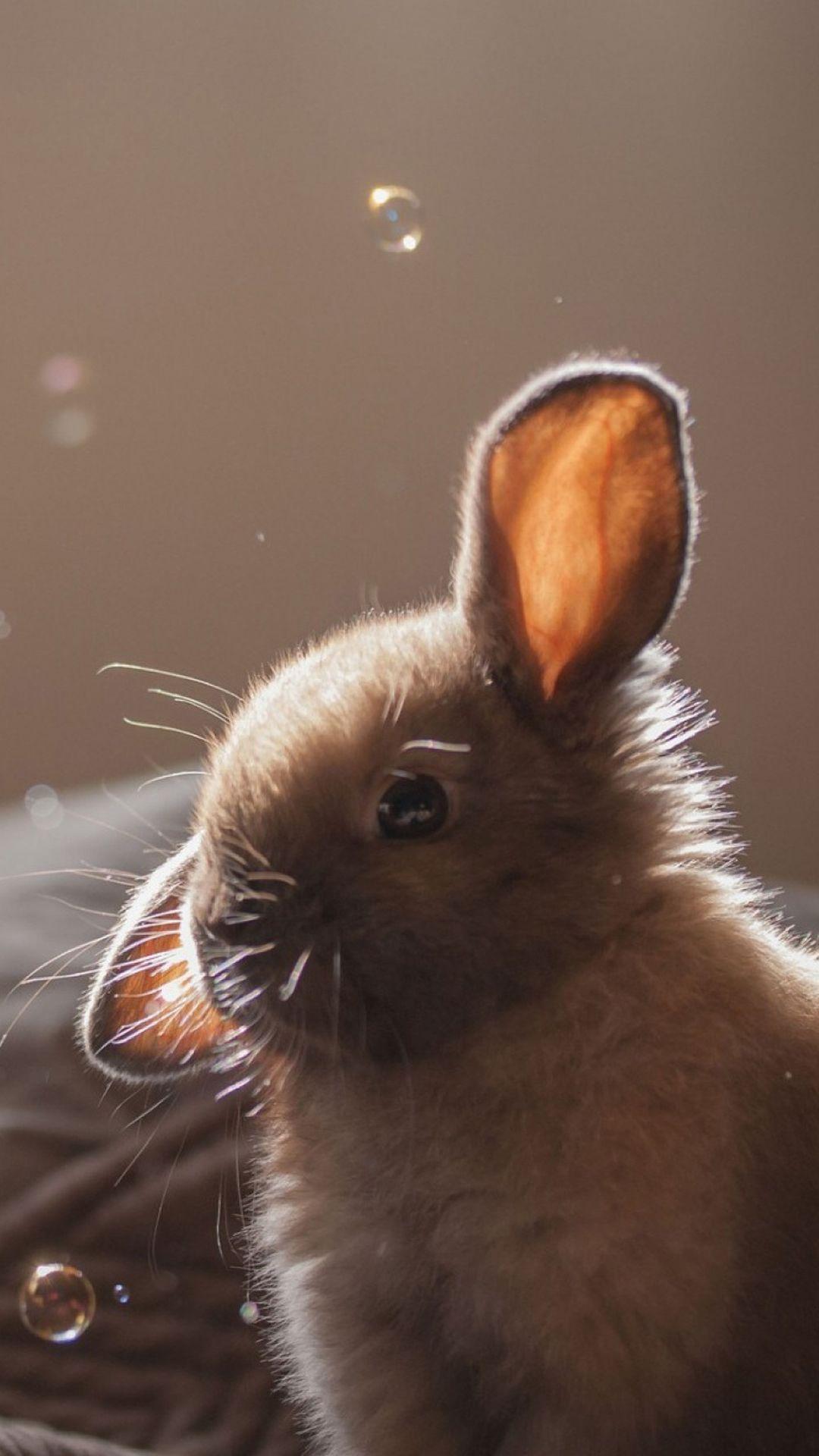 Cute Bunny Soap Bubbles IPhone 6 Wallpaper