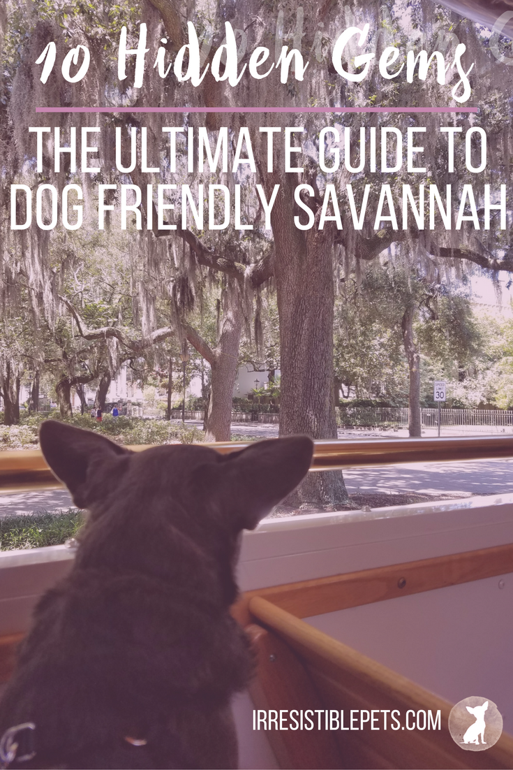 For My Birthday Weekend And A Mini Baby Moon We Decided To Take A Last Minute Road Trip To Savannah Ga A Baby Dog Friendly Vacation Savannah Chat Dog Friends