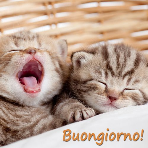 Buongiorno con sbadiglio buon giornoo pinterest for Buongiorno con gattini