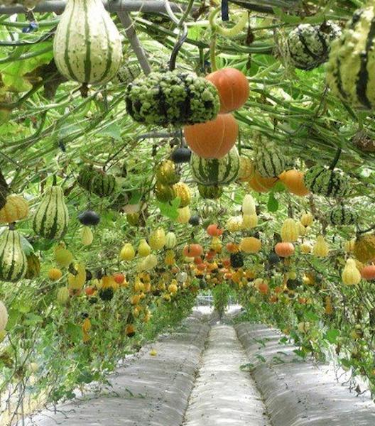 9 Vegetable Gardens Using Vertical Gardening Ideas: Verticle Garden, Garden Ideas To