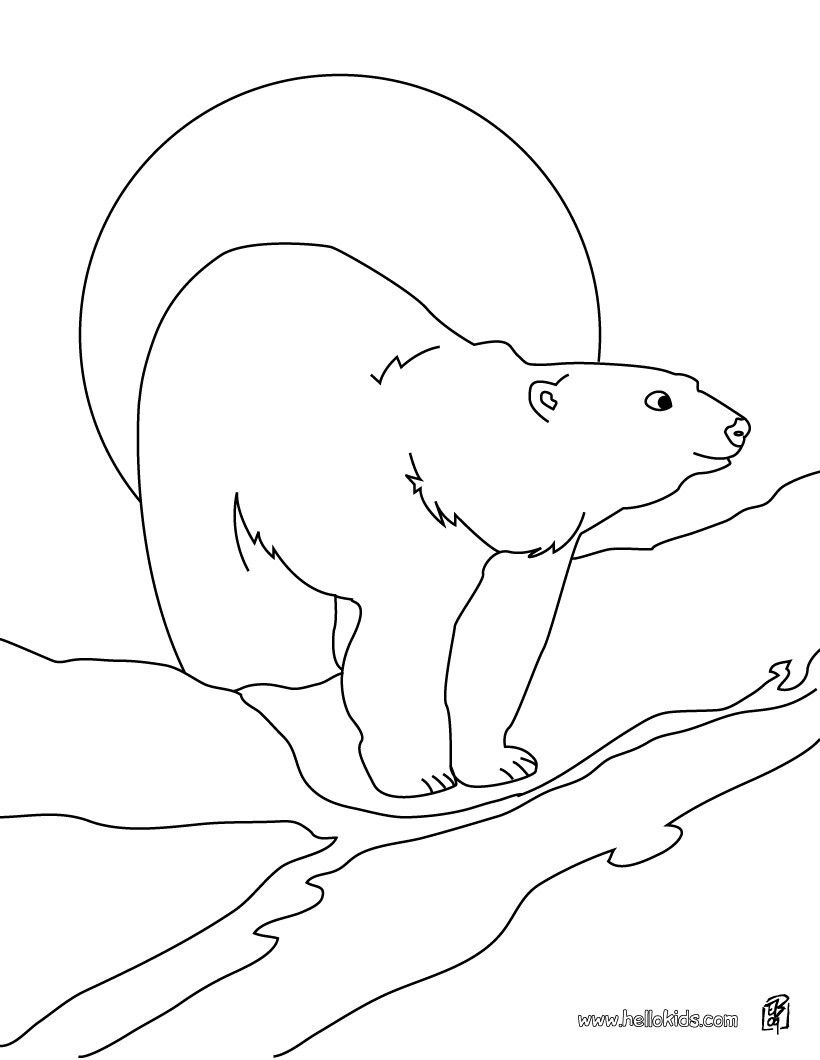 Polar Bear Coloring Sheet More Arctic Animals Coloring Page On