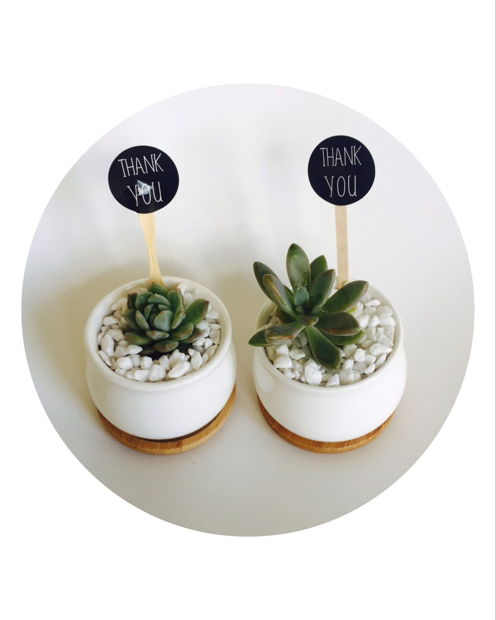 Pin by Succulent Wedding Favours, Party Favours, Corporate Favours ...