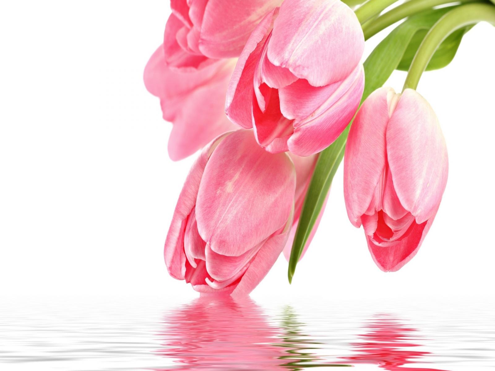 best 25 tulip flower pictures ideas on pinterest spring flowers