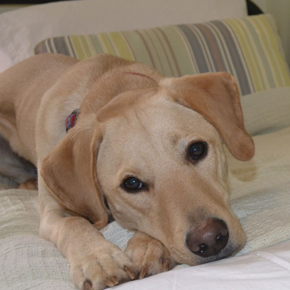 Pet Friendly Hotels for Dogs and Cats
