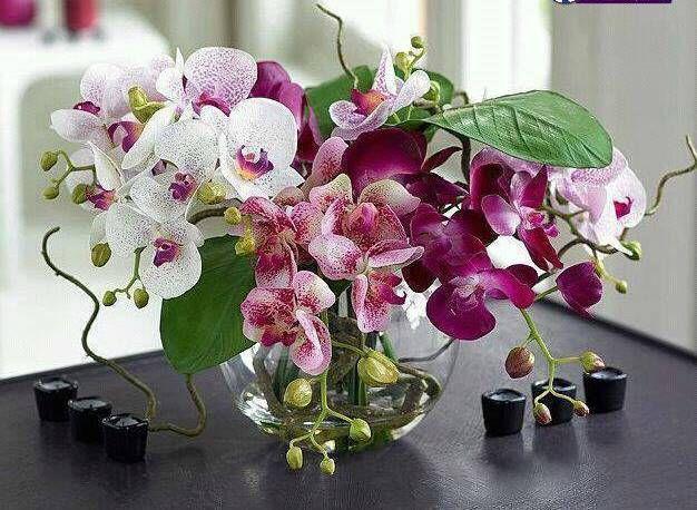 bouqué d'orchids