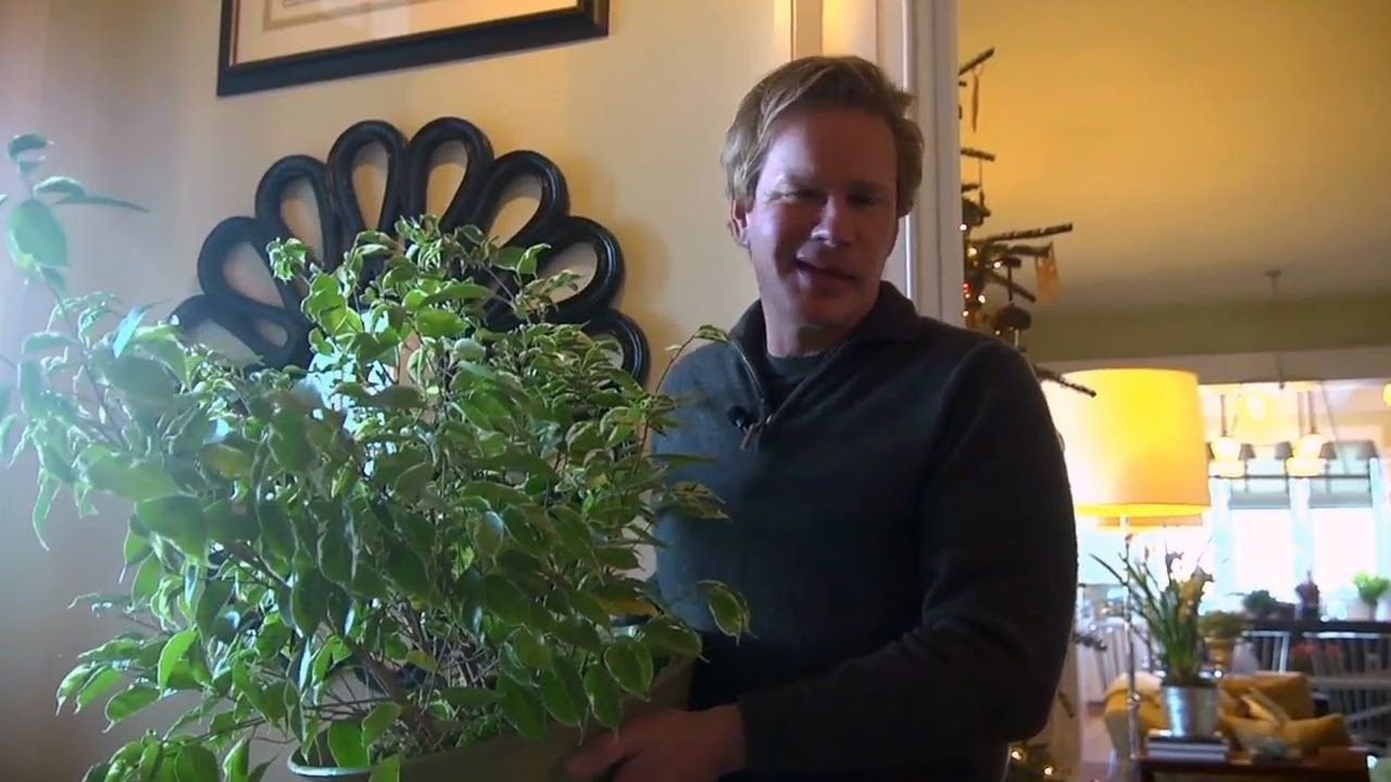 Growing Ficus Indoors | At Home With P. Allen Smith