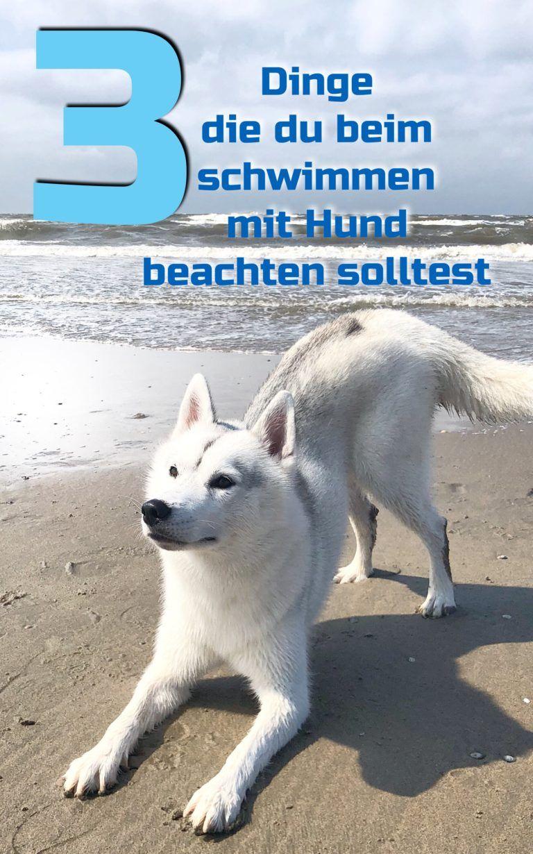 Schwimmen Mit Hund Darauf Solltest Du Achten Undercover