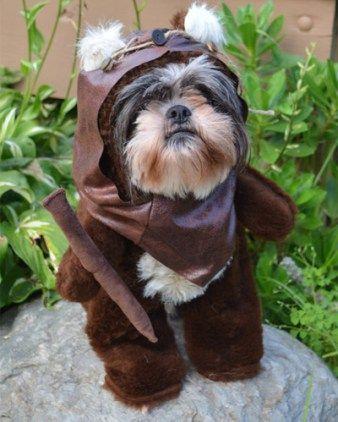 Did Shih Tzus Inspire The Ewoks From Star Wars Ewok Dog Costume