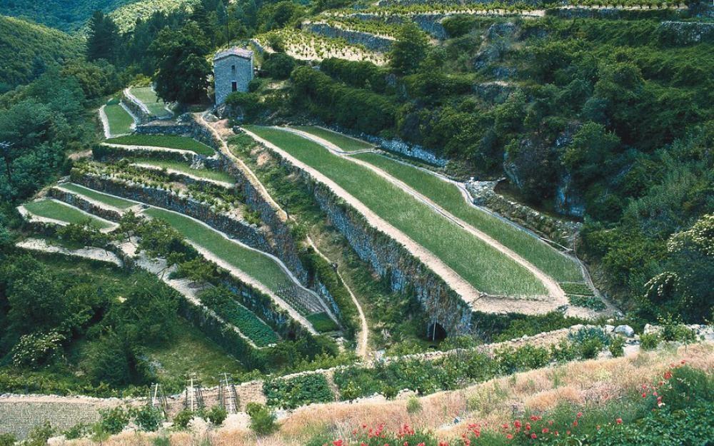 bancels ou faïsses (terrasses) à SaintAndré de Majencoule