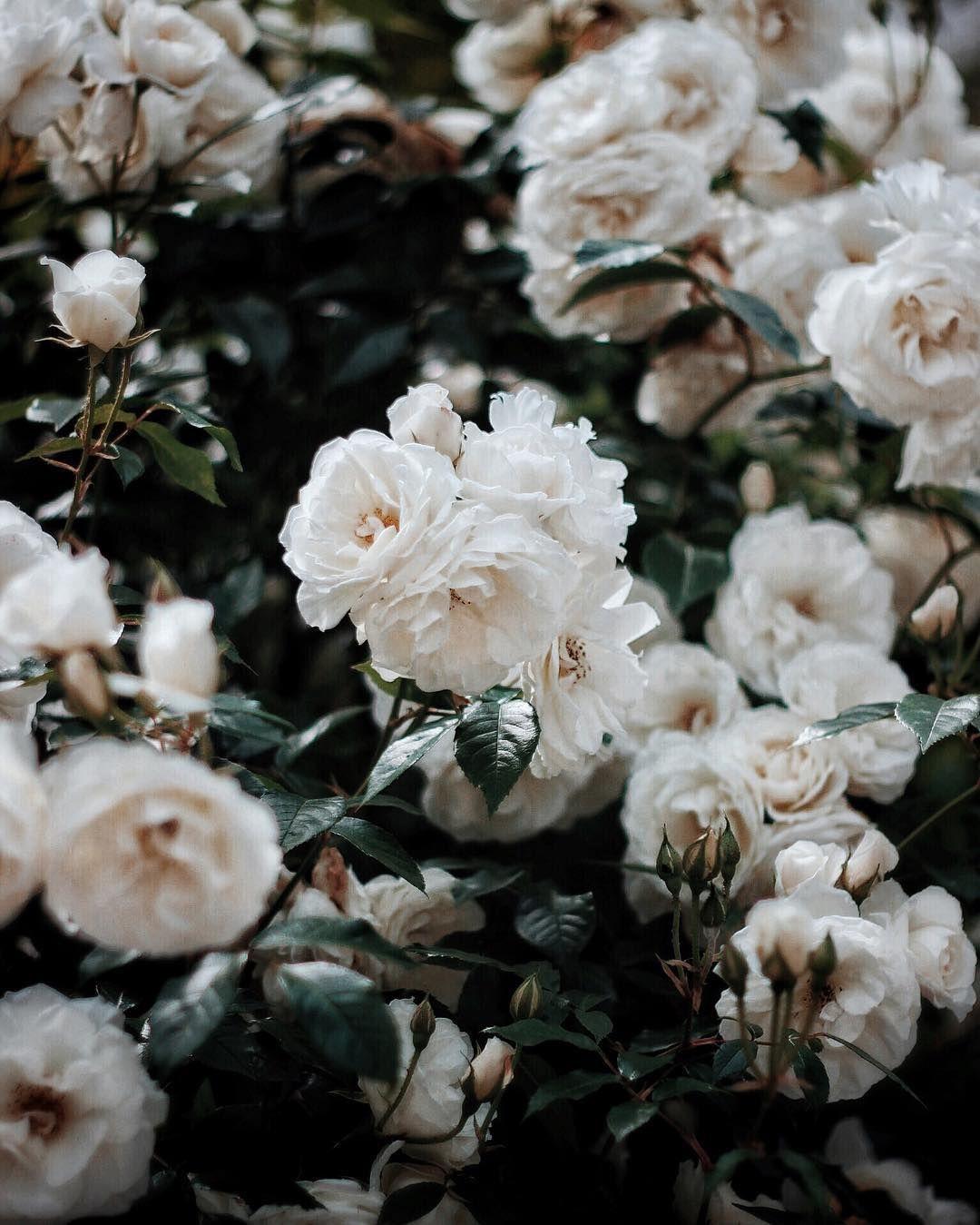Pinterest candiceocheung Pretty flowers, Love flowers