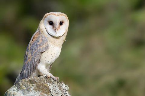 How to Attract Owls to Your Yard With an Owl Box | Owl box ...