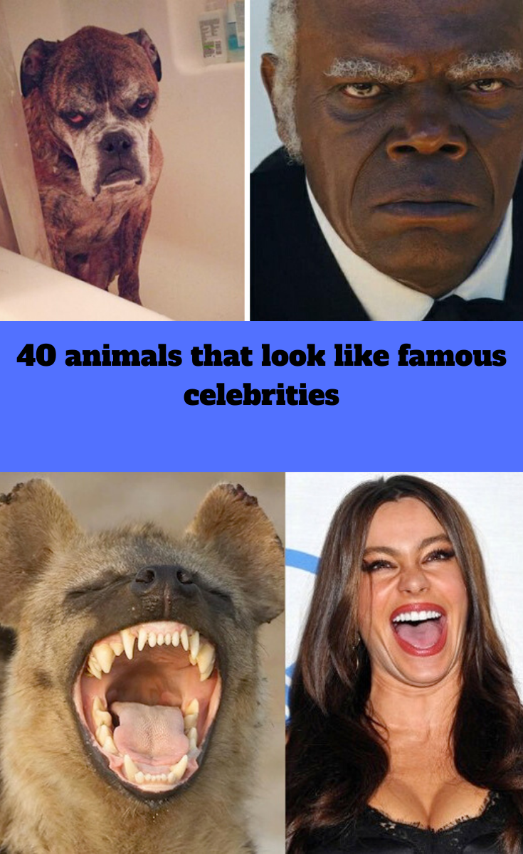 40 animals that look like famous celebrities