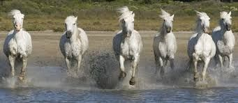 the camargue - Google Search