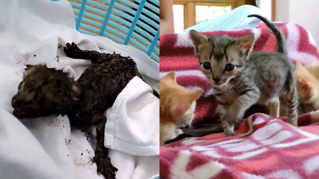 Newborn Orphaned Kittens Trapped In Exhaust Duct Rescued Newborn Kittens Kitten Rescue Kittens