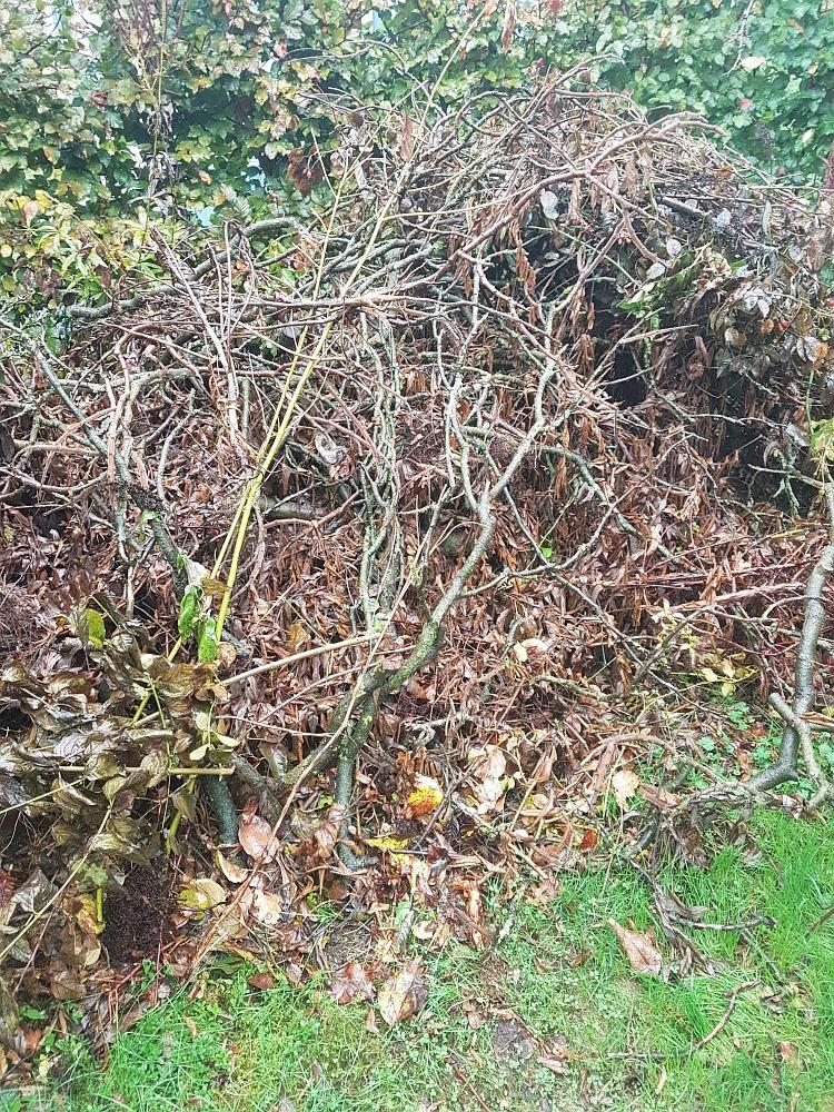 Totholz Als Herberge Und Fur Neues Leben Gartenparadies Garten Und Naturgarten