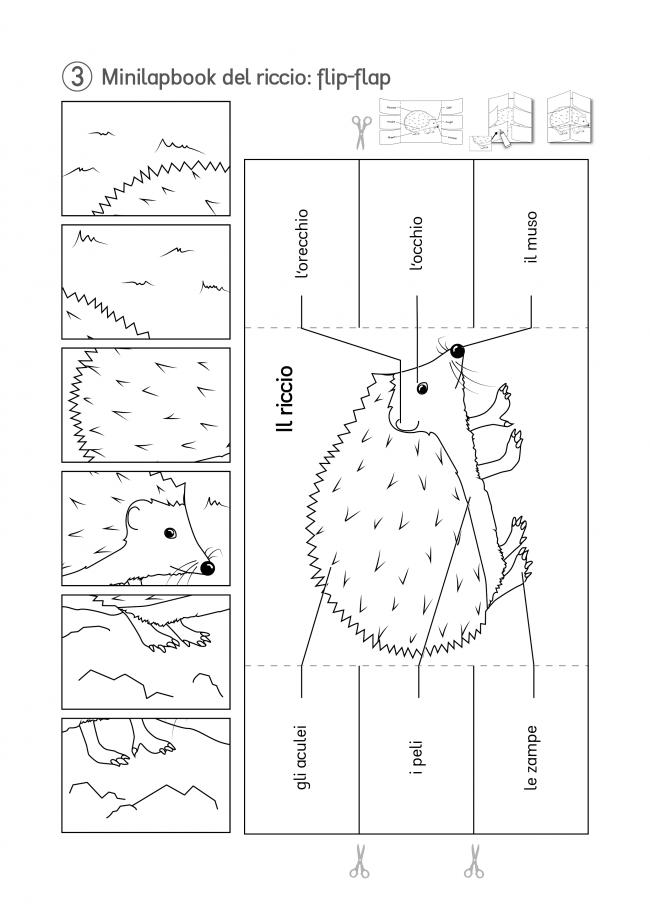 3-KiGaPortal-Kindergarten-Scuola-dell-infanzia-lapbook-minilapbook-ilRiccio-flip-flap-sw