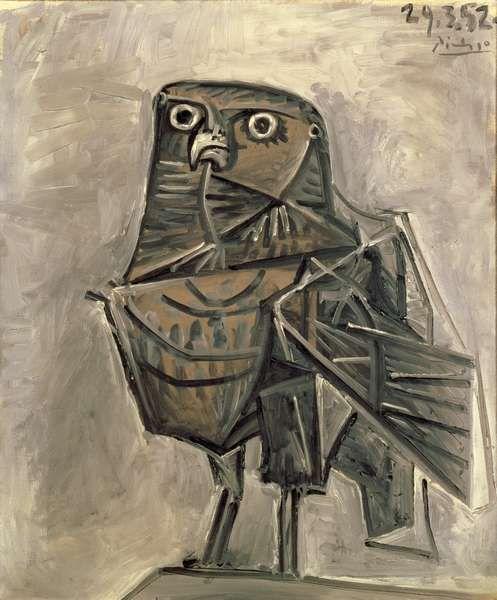 Picasso.  Coruja.  1952