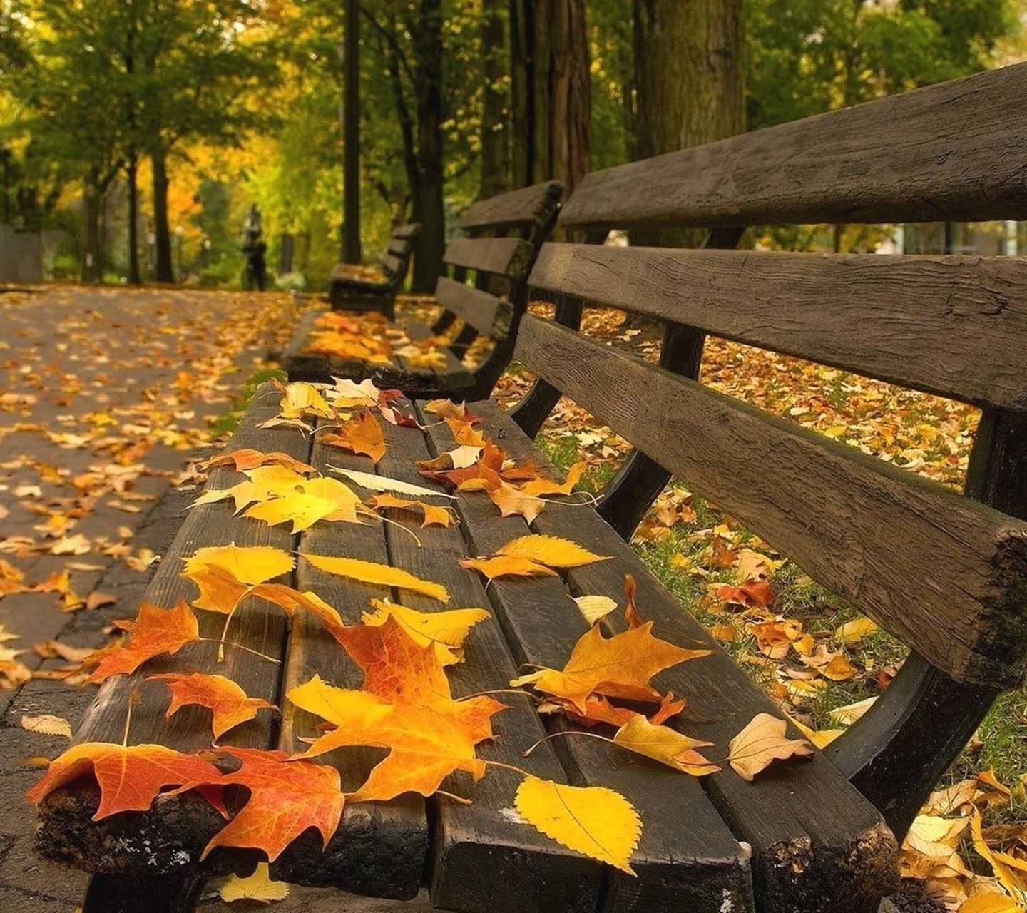 Download Hd Wallpapers Of 306331 Nature Leaves Bench Free Download High Quality And Widescreen Resol Desktop Background Images Wallpaper Backgrounds Desktop