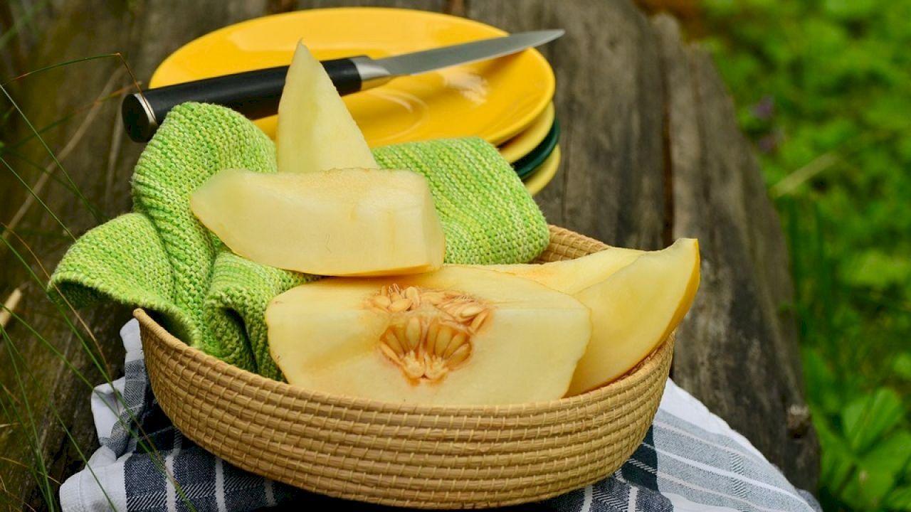 فوائد الشمام للرجيم Honeydew And Cantaloupe Melon Benefits Growing Cantaloupe