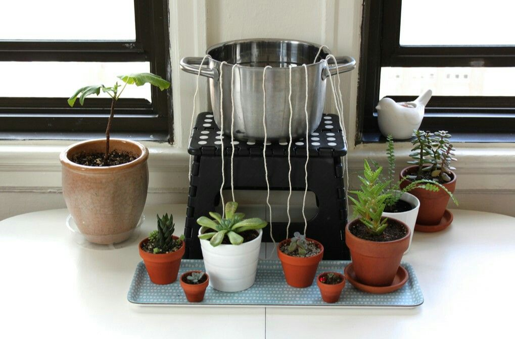 How To Self Water Plants When Away From Home Self Watering