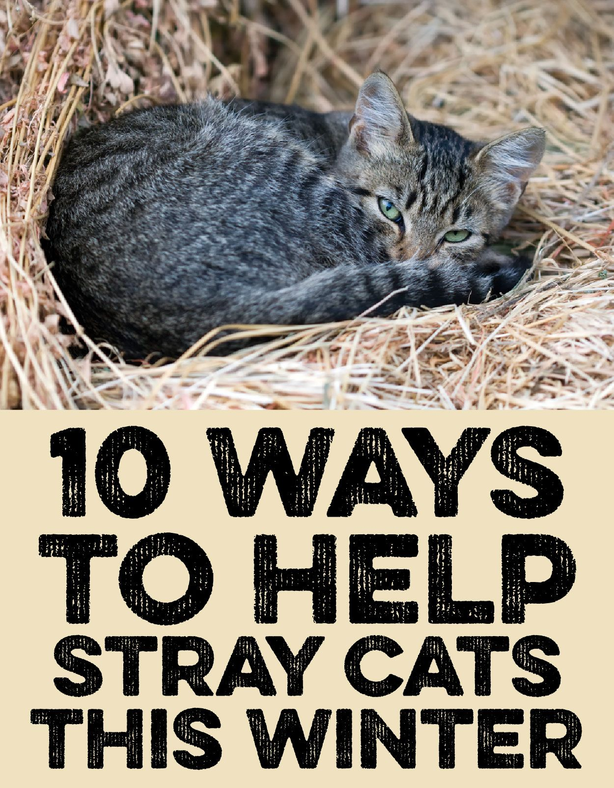 10 Ways To Help Stray Cats This Winter Feral Cat Shelter Cats Stray Cat