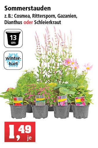 Thomas Philipps Onlineshop Garten Shops Cosmea Online Shop