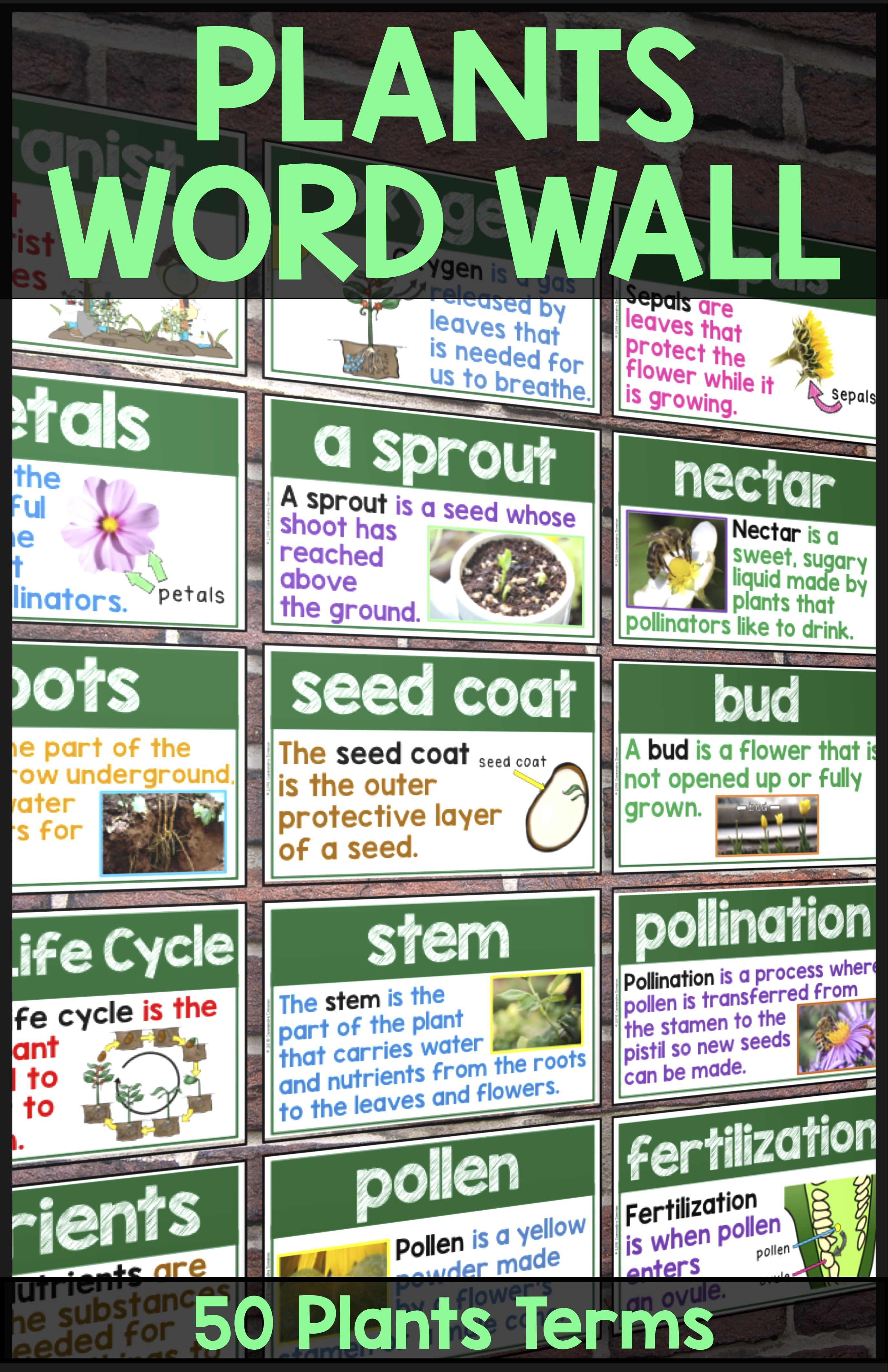 Plants Word Wall Plants Posters or Flashcards for 52