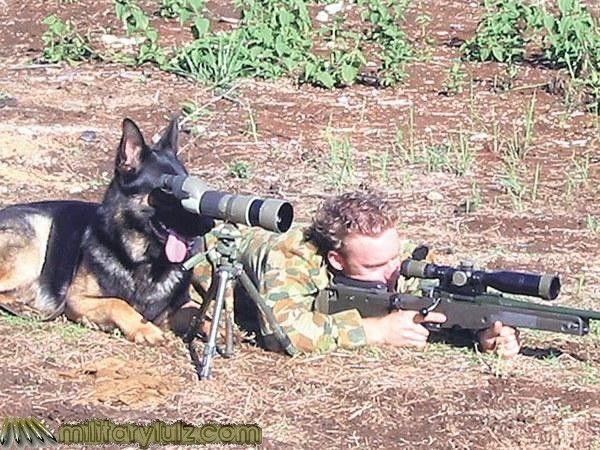 Target... Squirrel, distance... 230 Yards