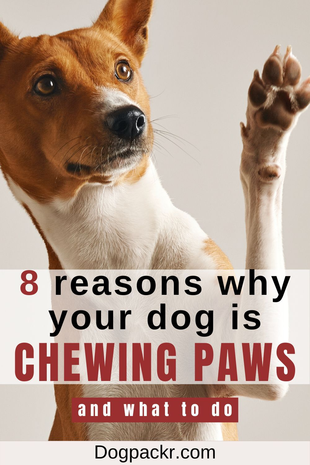 f355a431481ee831c5b7a21be9c066e2 - How Can I Get My Dog To Chew His Food