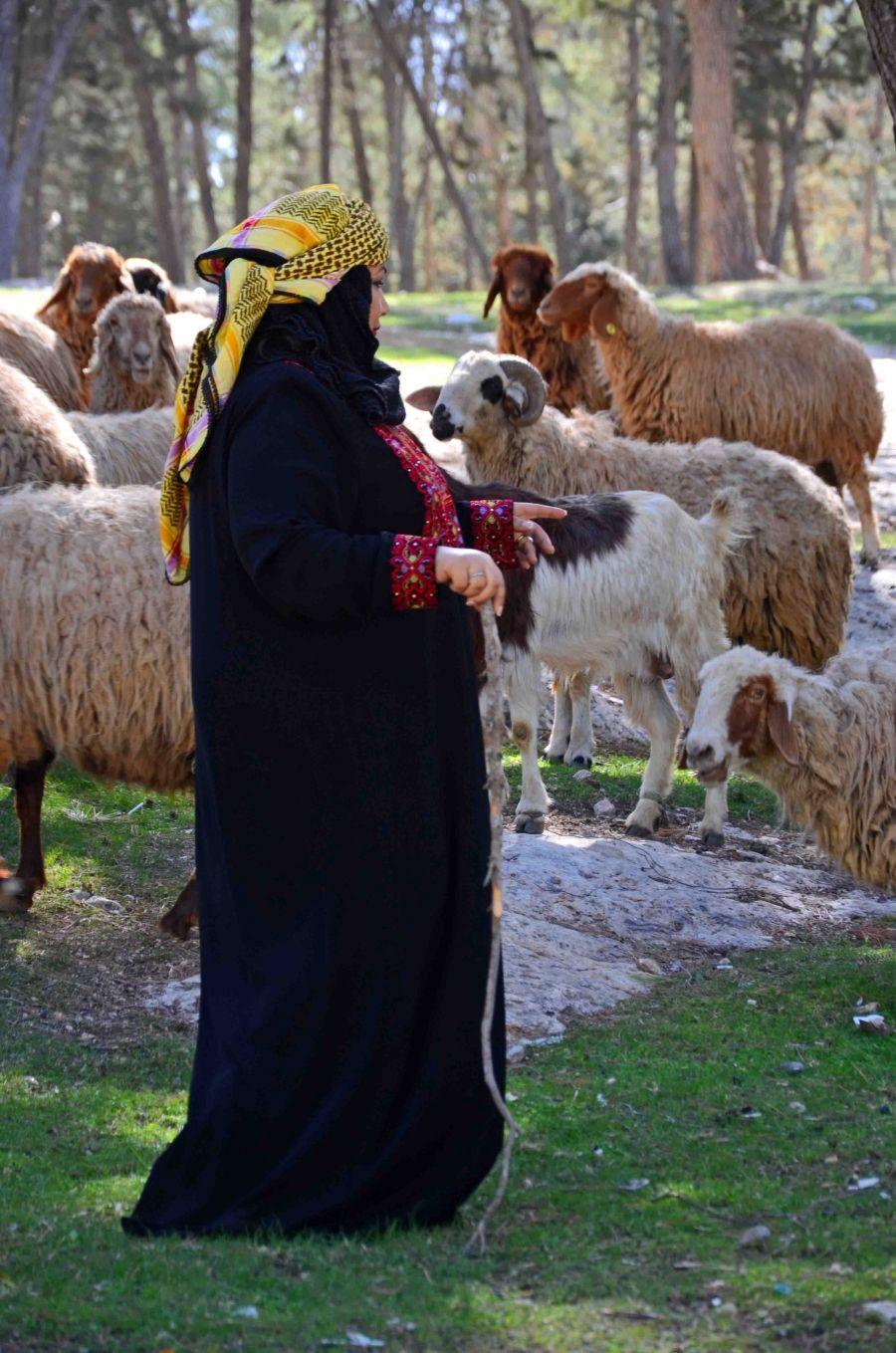 صورة راعية الأغنام للمصورة زهراء السماك شاهد الصورة على الموقع Http Www Ph Wall Com Photo Php Id 600 حائط Animals Goats