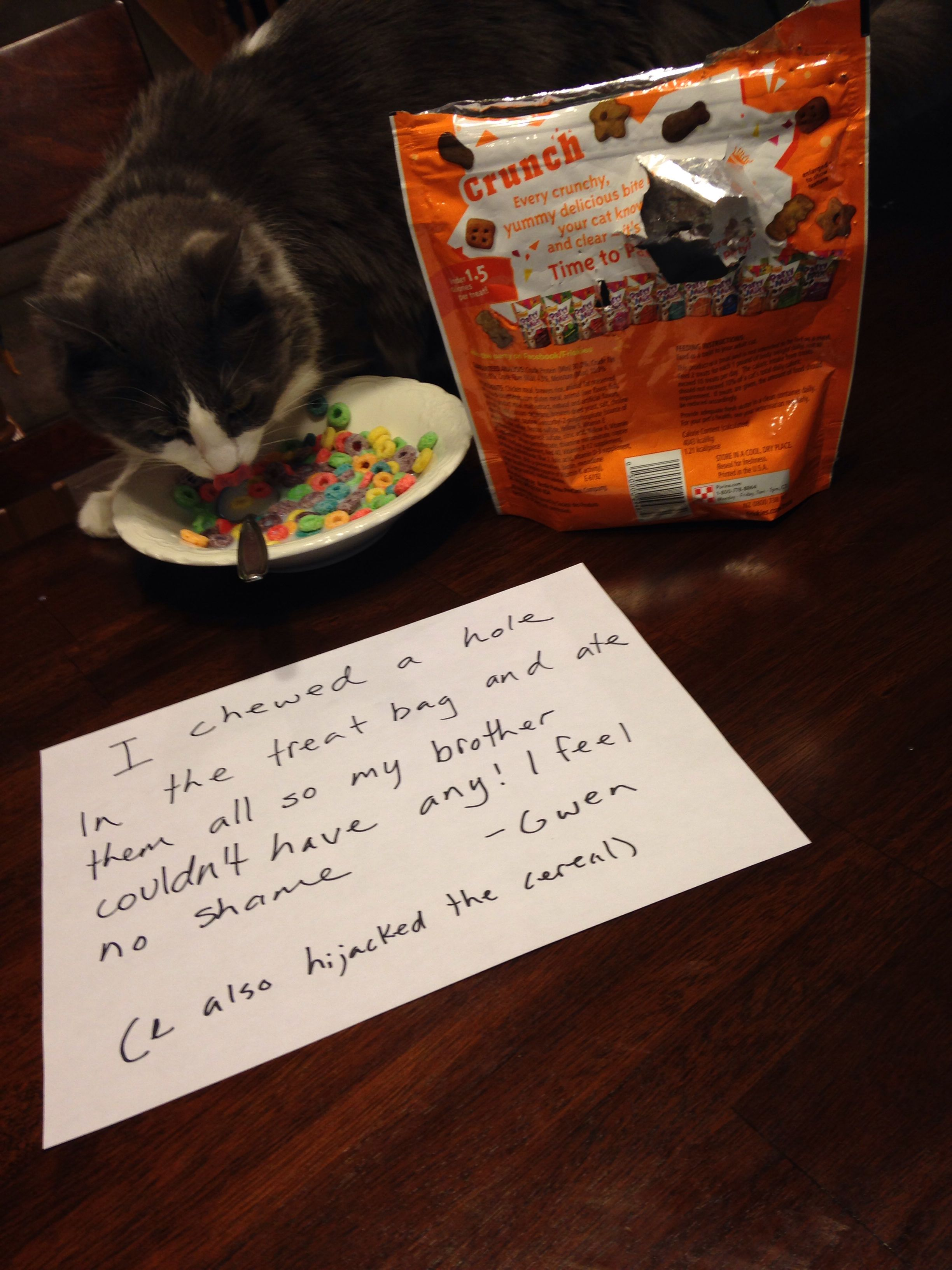 """""""I chewed a hole in the treat bag and ate then all so my brother couldn't have any! I have no shame!  -Gwen  (I also hijacked the cereal)""""  #cat shaming"""