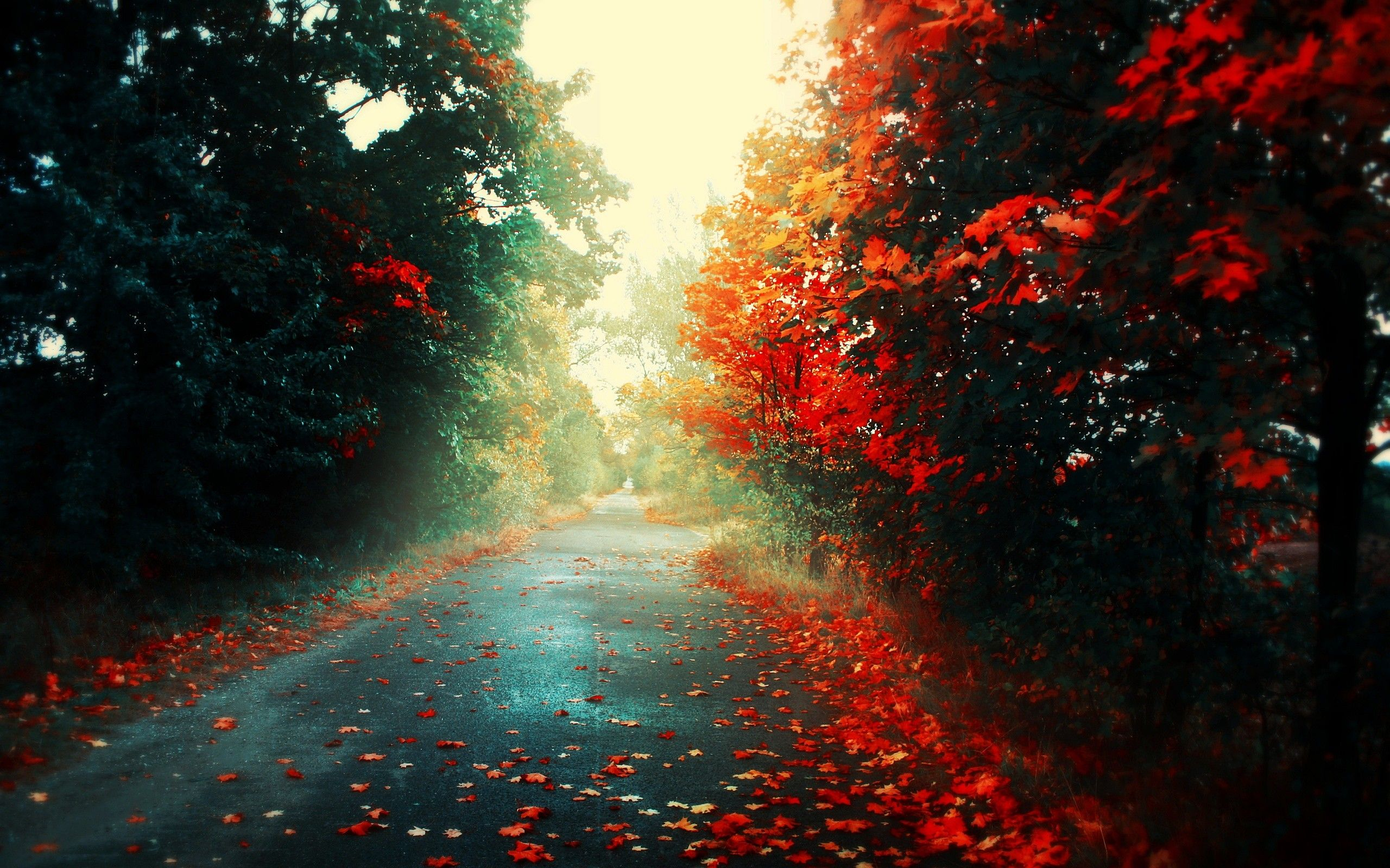 Landscapes Trees Autumn Season Leaves Roads Fallen