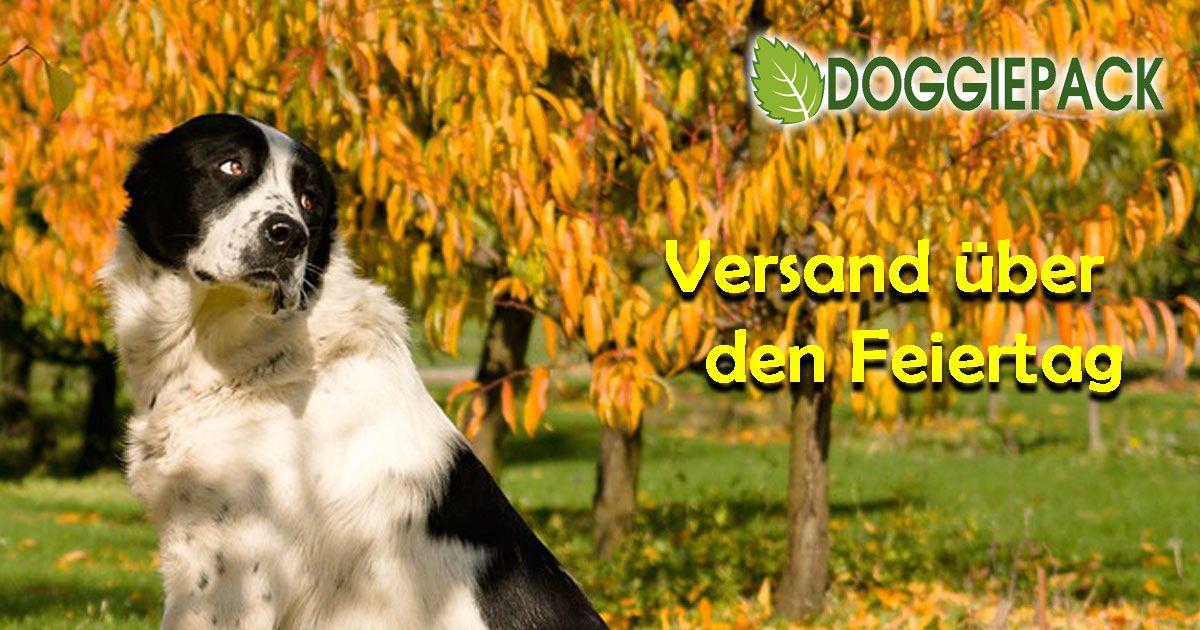 Versand Feiertag Mit Bildern Hunde Futter Hunde Hundefutter