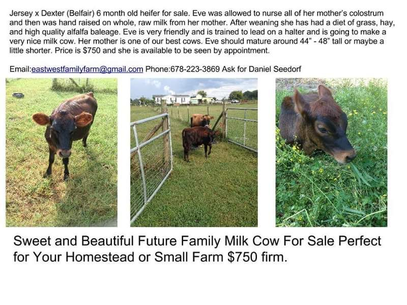 Occasionally we have calves, pigs, and other animals for