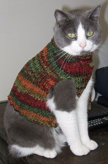 sweaters on cats