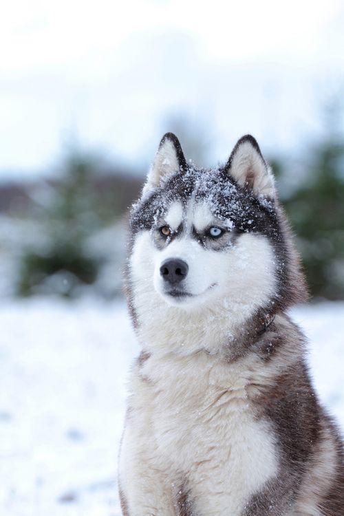 Pin En Pups Dogs