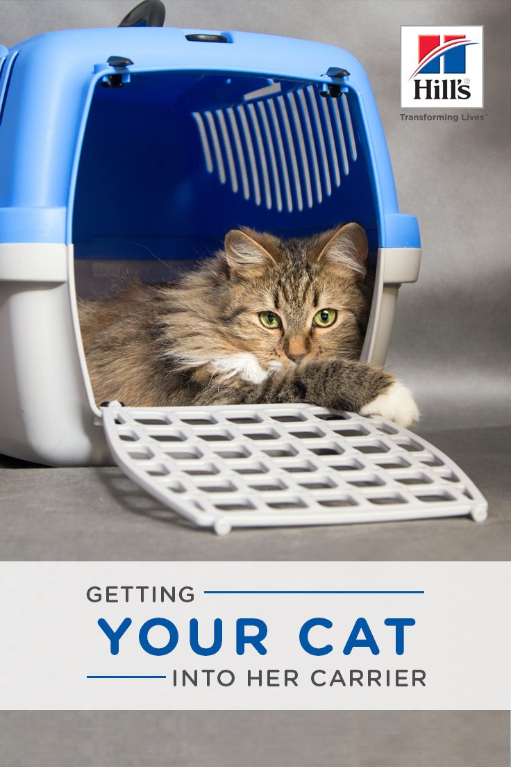 How to Get a Cat in Her Carrier Cats, Calming cat, Cat