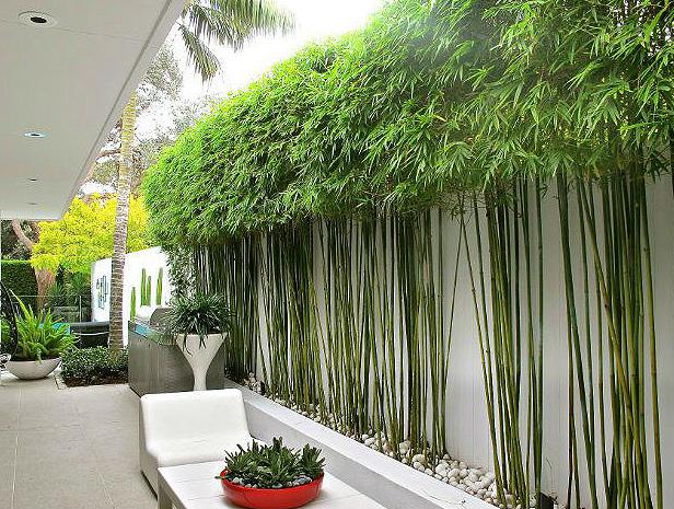 Bamboo Landscape