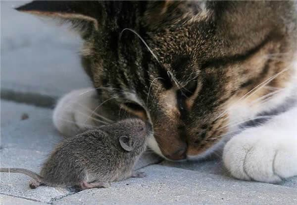 19 Cat And Mouse Friends Examples That Will Make You Believe In Love Again  | Cats, Cute animals, Funny animals