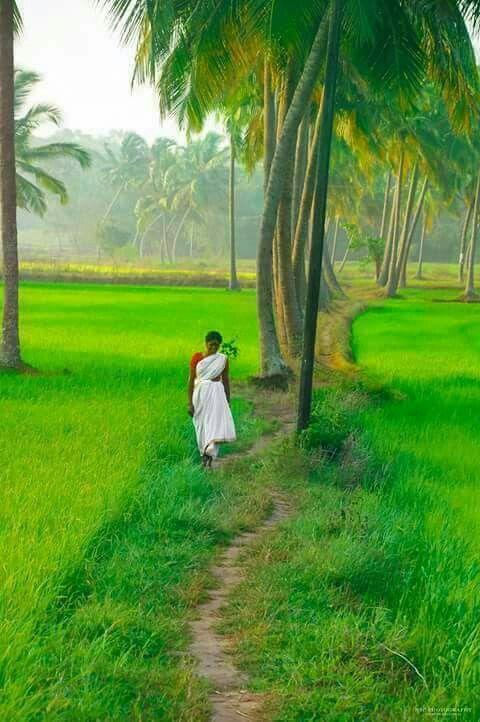 Kerala Landscape Https Loinz Blogspot Com Village Photography Beautiful Nature Nature Photography