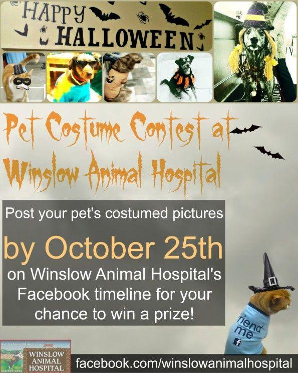 Pet Halloween Costume Contest Flyer | Community Events ...