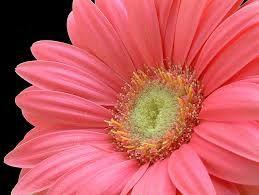 Resultado de imagem para flores
