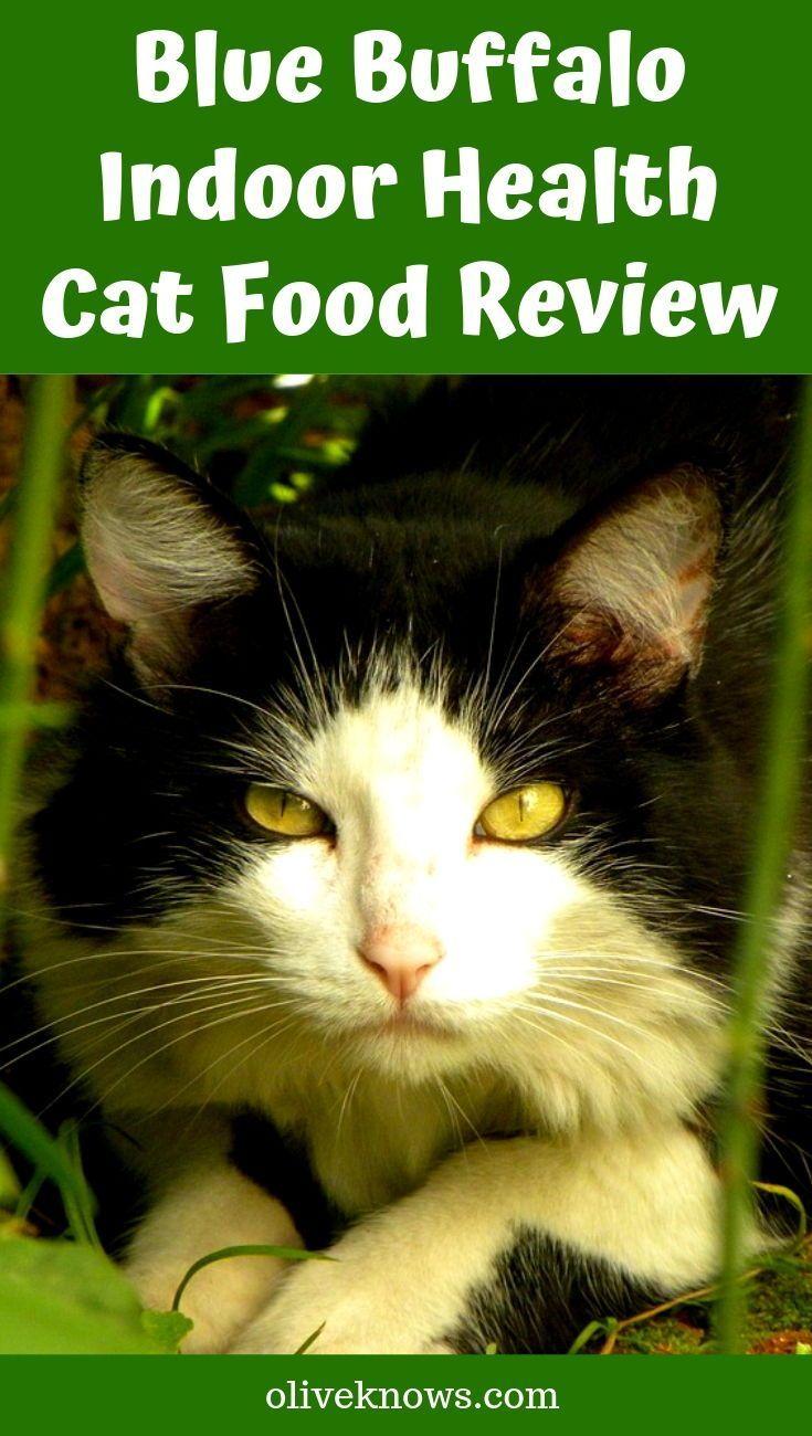 Blue Buffalo Indoor Health Cat Food Review Cat food