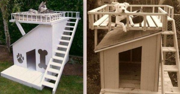 des niches pour chien, originales et insolites ! | chien