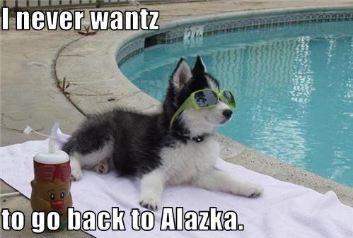 Meme Funny Husky Dogs : Husky memes funny pinterest memes dog and animal