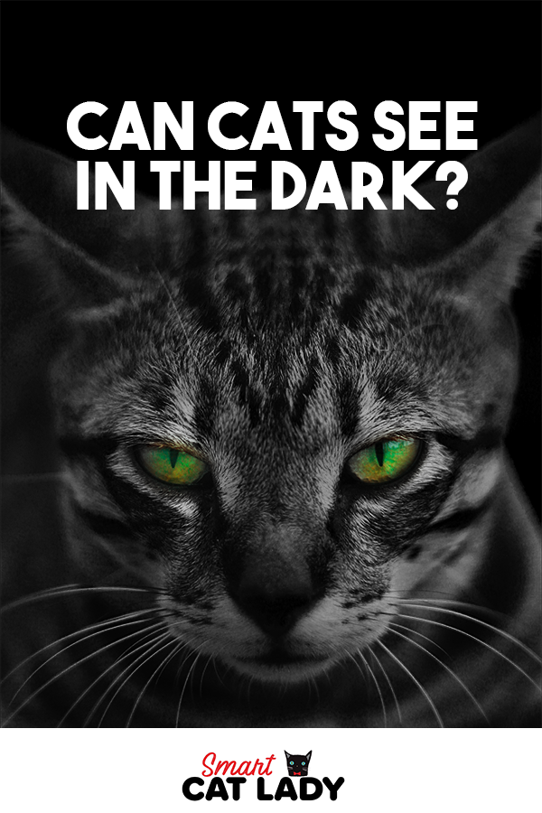 Can Cats See In The Dark? in 2020 (With images) Cat with