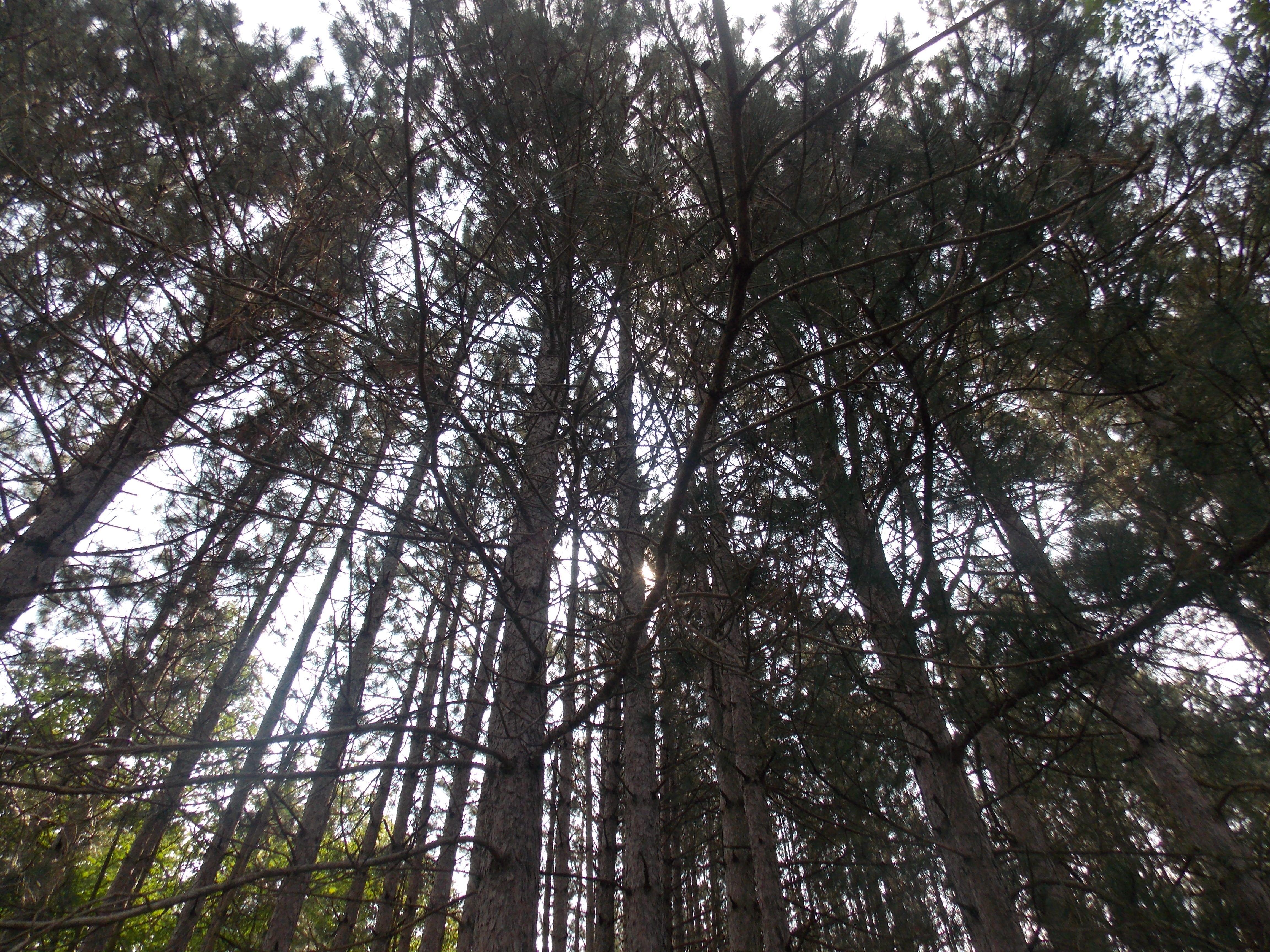 beautiful trees in Quebec, Canada