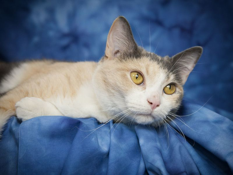 Adopt VALERIE on Kitty, Short hair cats, Pet care