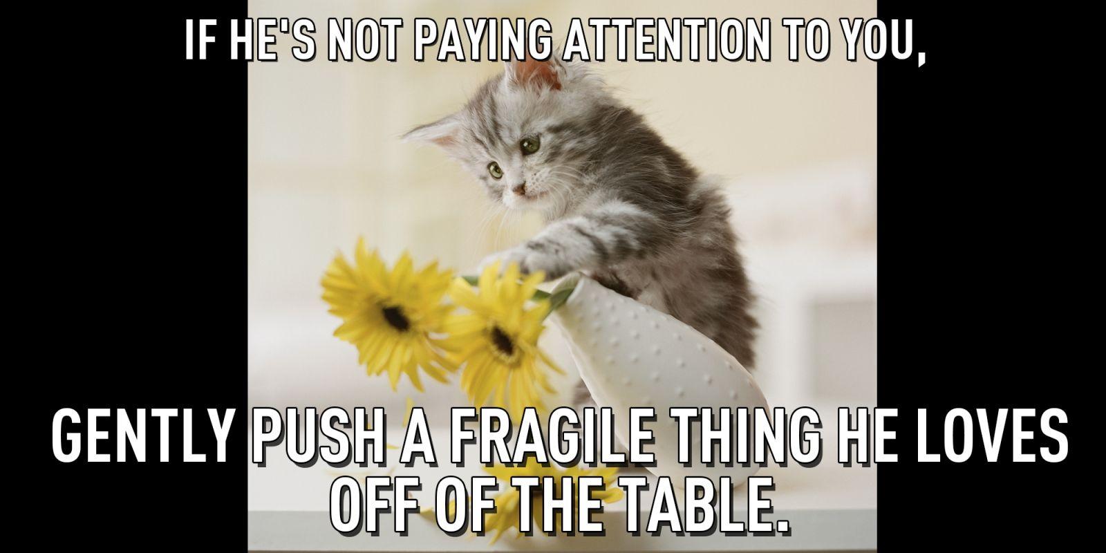 16 Invaluable Pieces Of Love Advice From Cats Love Advice Hello Kitten Kitten Adoption