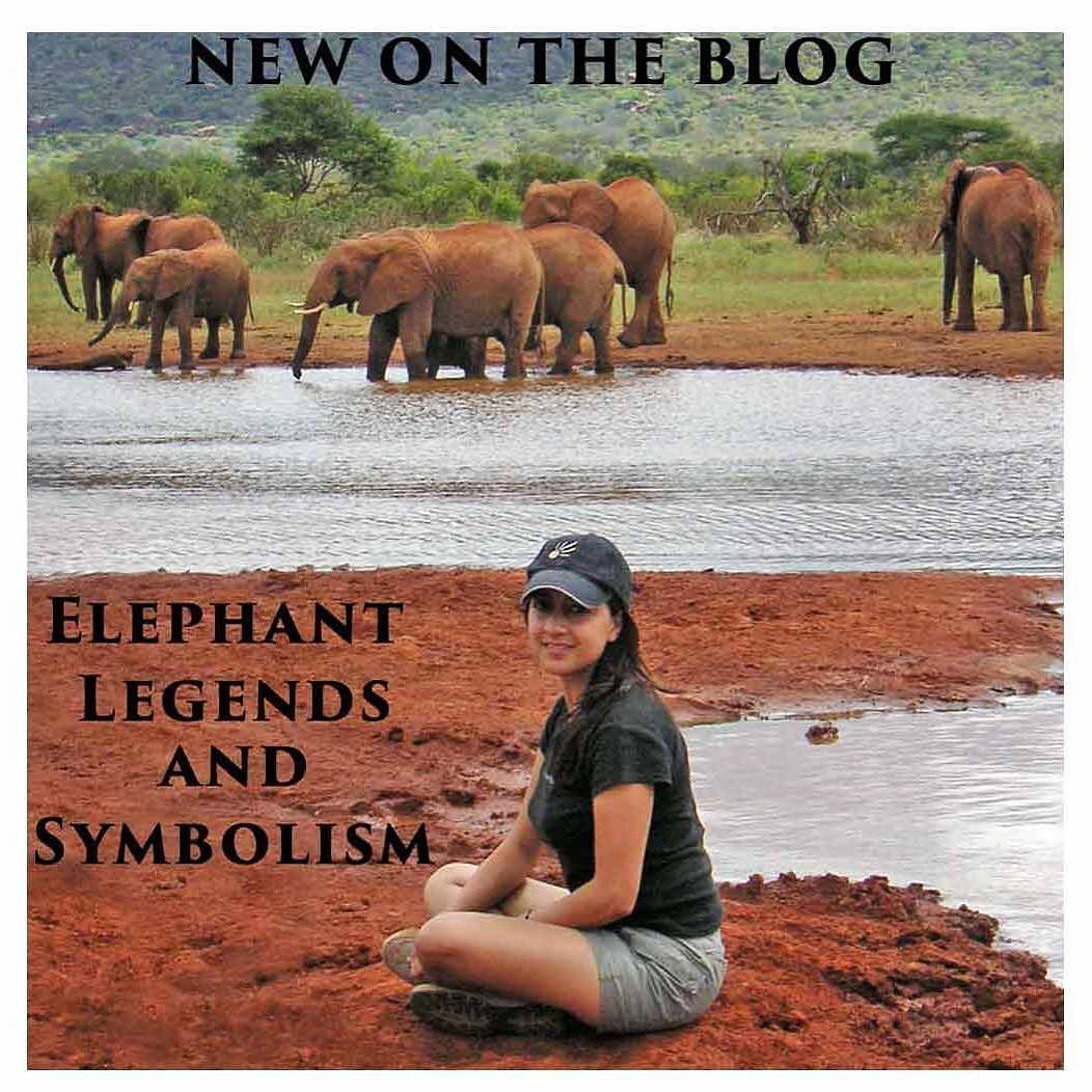 Elephants are one of my favourite animals and i had the privilege intriguing elephant legends symbolism and mythology has permeated through many cultures and religions since antiquity buycottarizona Gallery